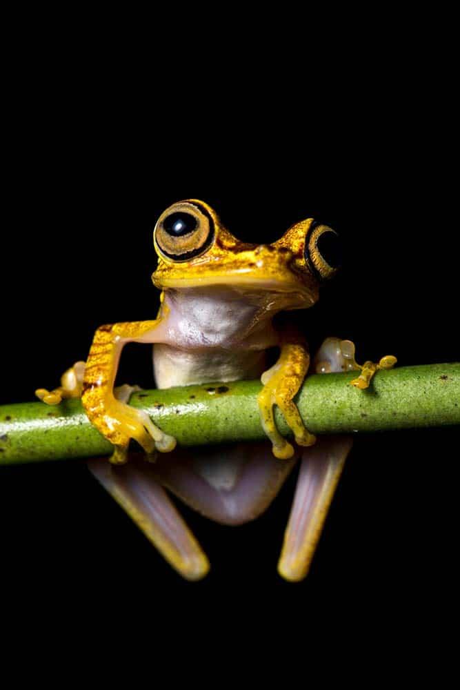 Frogs_01.jpg