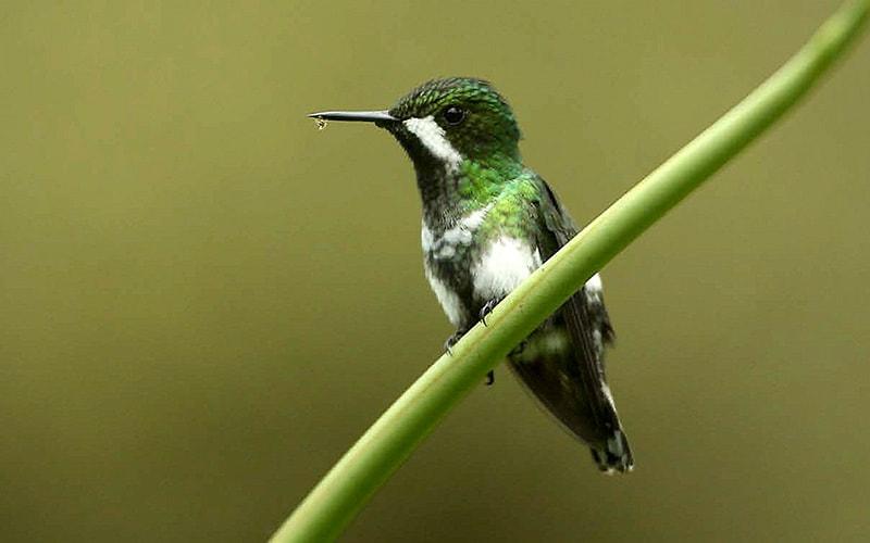 hummingbird_800x500.jpg