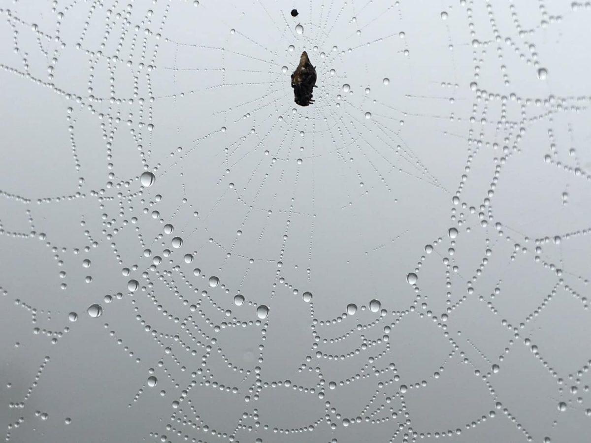 spider-webs-mashpi-01-1200x900.jpg