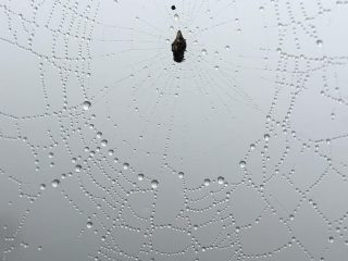 Spiders in the Mist