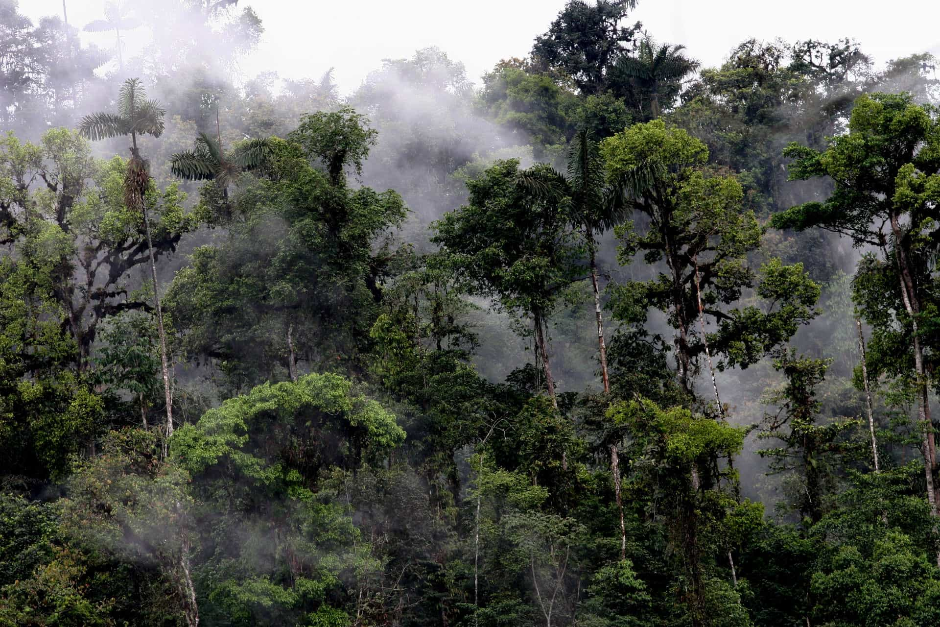 Mashpi-Lodge-Cloud-Forest.jpg