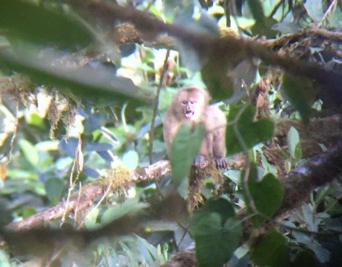 mono-capuchino-1200x937.jpg
