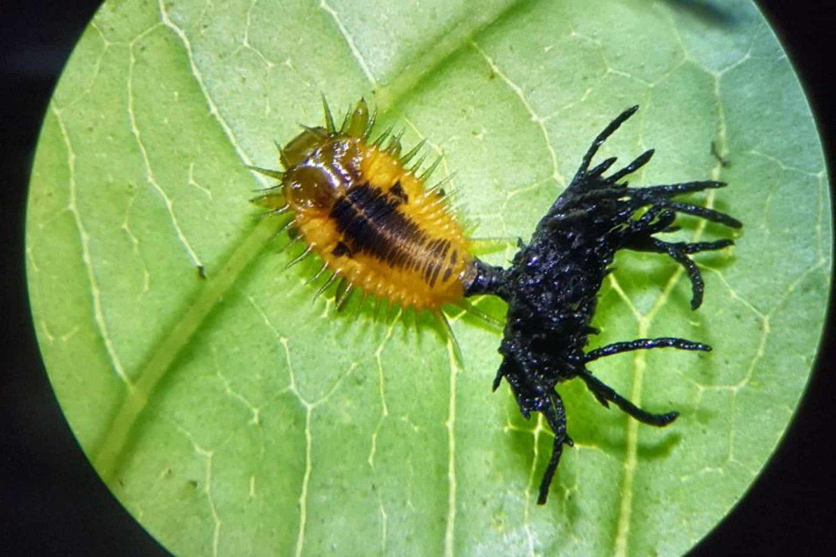 escarabajo_2-1200x800.jpg