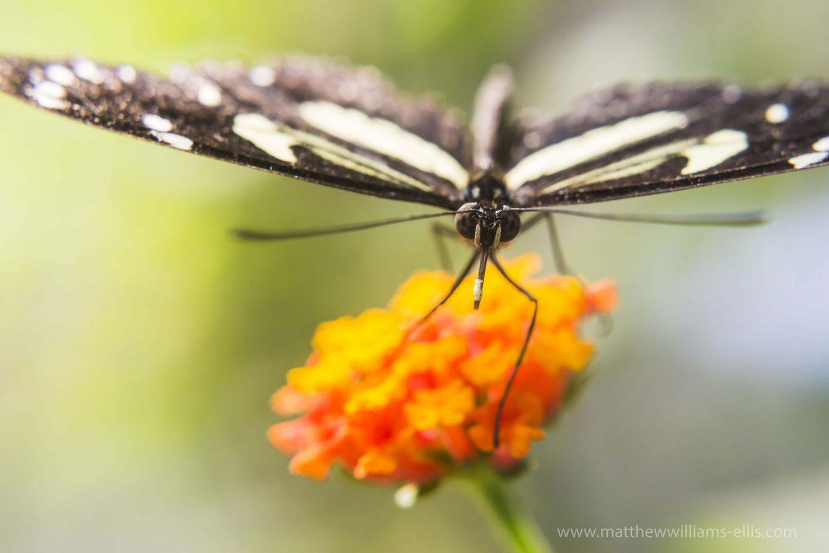 Butterfly-Mashpi-Cloud-Forest-1200x800.jpg