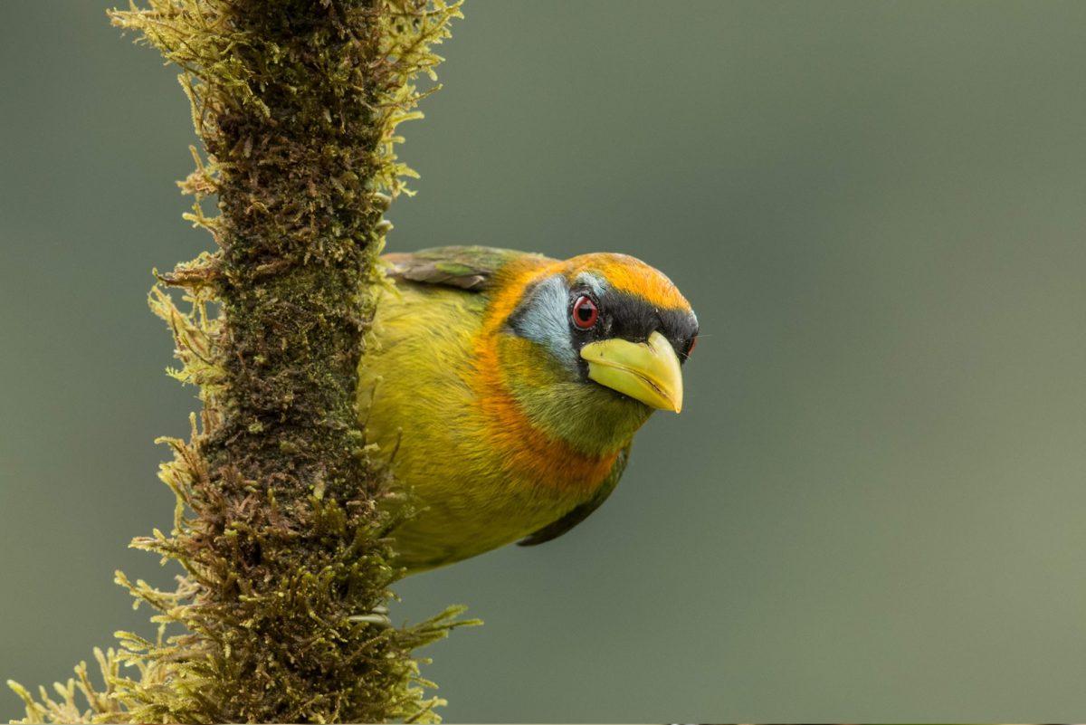 birds-in-mashpilodge-by-carlos-morochz-05-1200x801.jpg