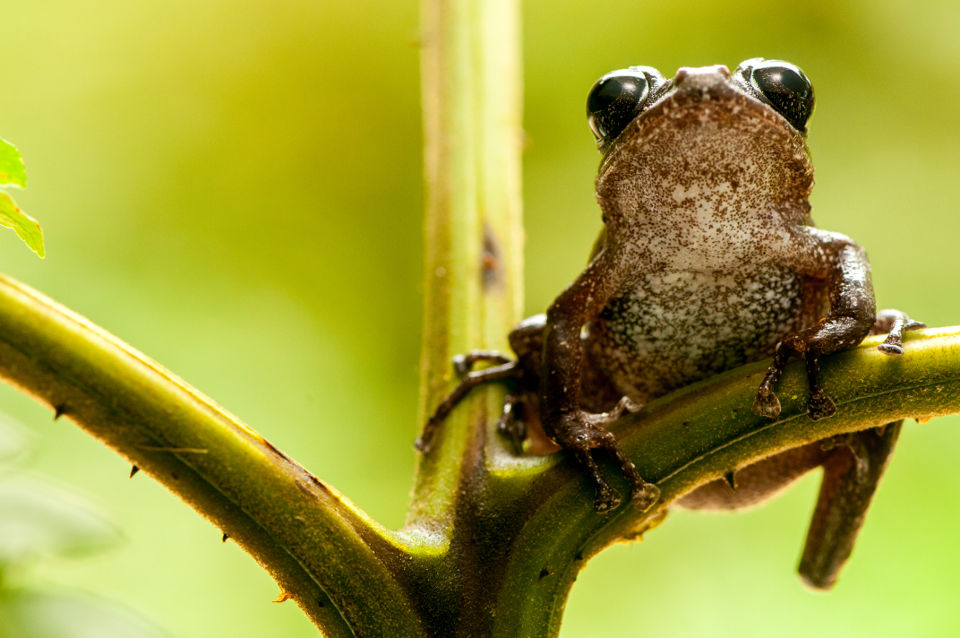 frogs of mashpi lodge