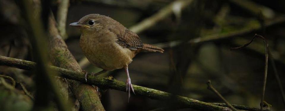 brown-bird-mashpi-1.jpg