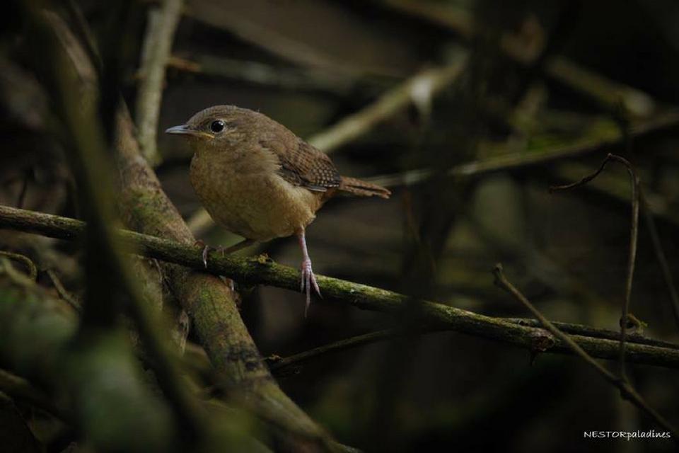 brown-bird-mashpi.jpg