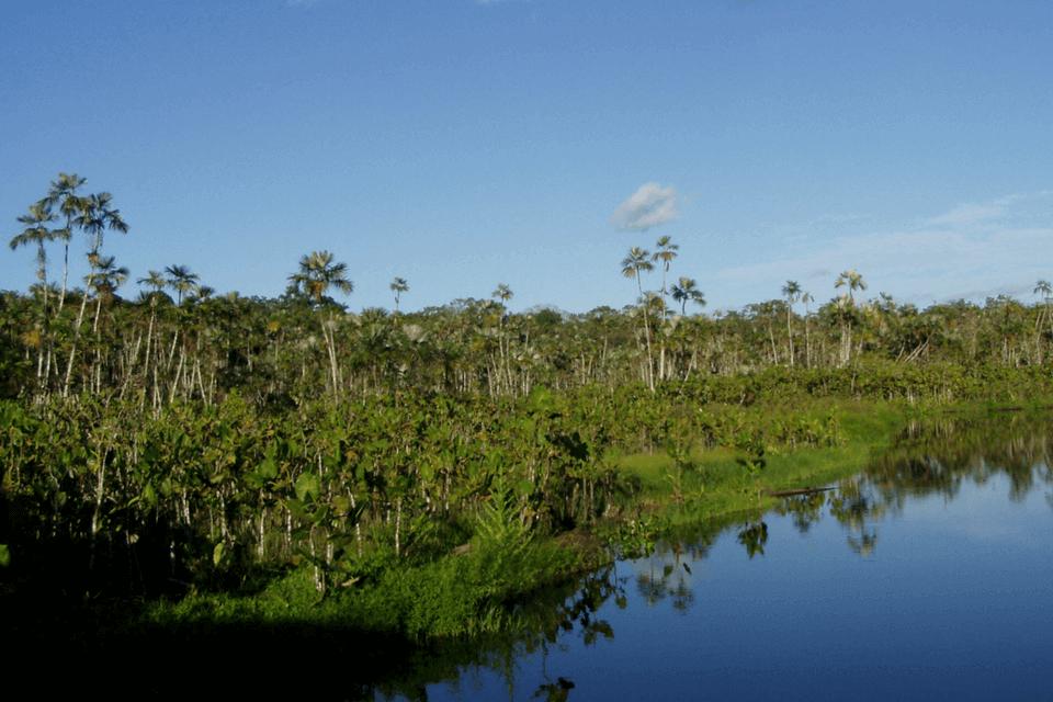 Amazonía-1