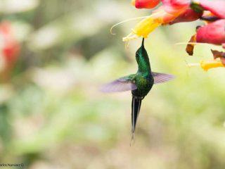 Avispas parasitoides y colicerda verde; encuentros cercanos con distintas especies