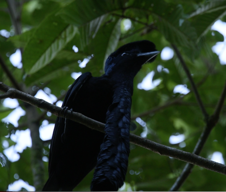 Pájaro-Paragüas-768x655.png