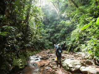 ¿Cuál es la diferencia entre la Reserva de Mashpi y la Amazonía en Ecuador? Un lugar a parte: el bosque nublado del Chocó en Ecuador