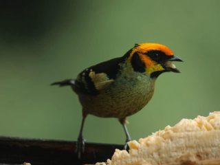 Alguna vez te has preguntado: ¿Cómo las aves obtuvieron sus picos?