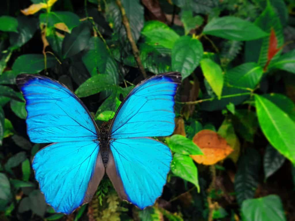 mariposas_mashpi_5-1024x768.jpg