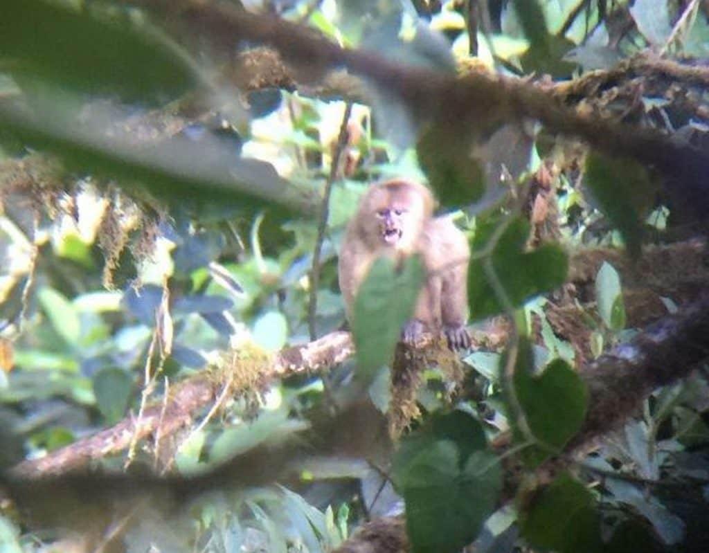 mono-capuchino-1024x799.jpg