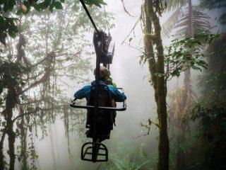 Volando entre las copas de los árboles