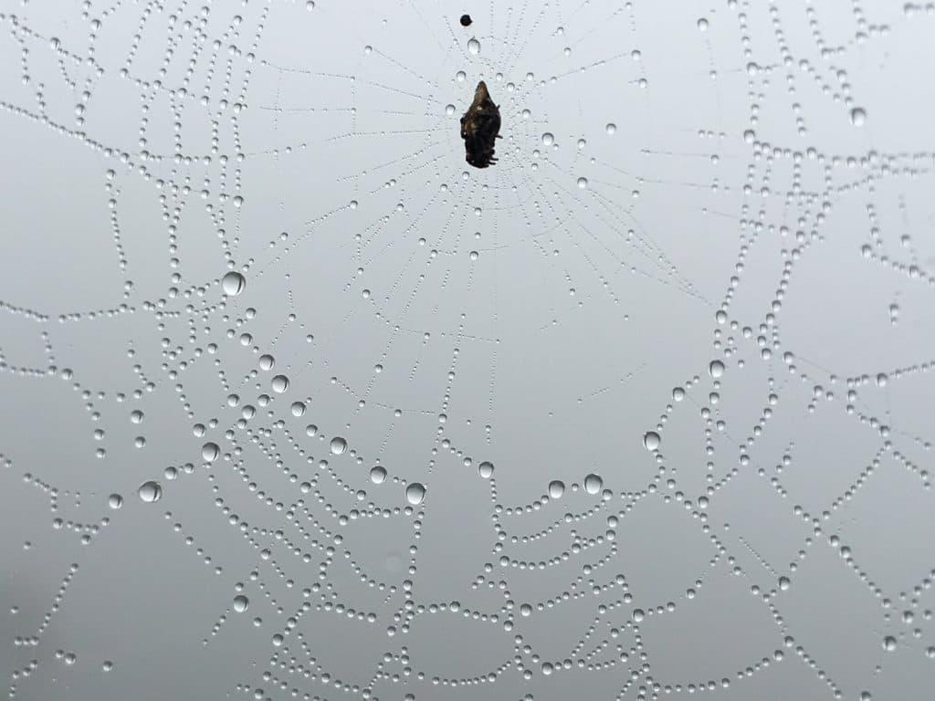 spider-webs-mashpi-01-1024x768.jpg