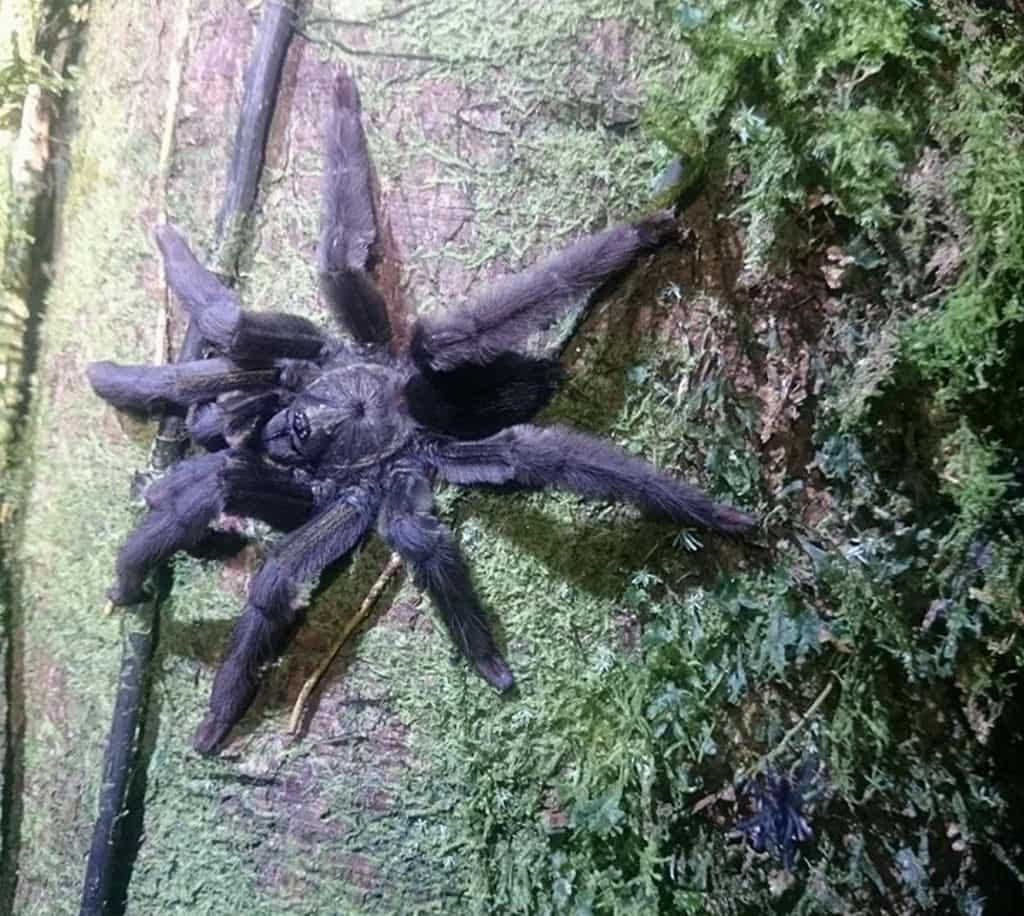 tarantula-1024x916.jpg