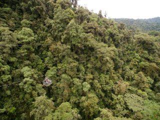 Pelando los estratos de un bosque húmedo tropical