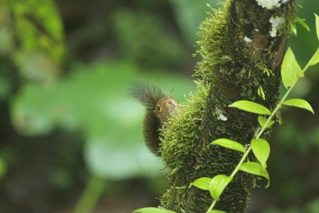 western-dwarf-squirrel-1024x683.jpg
