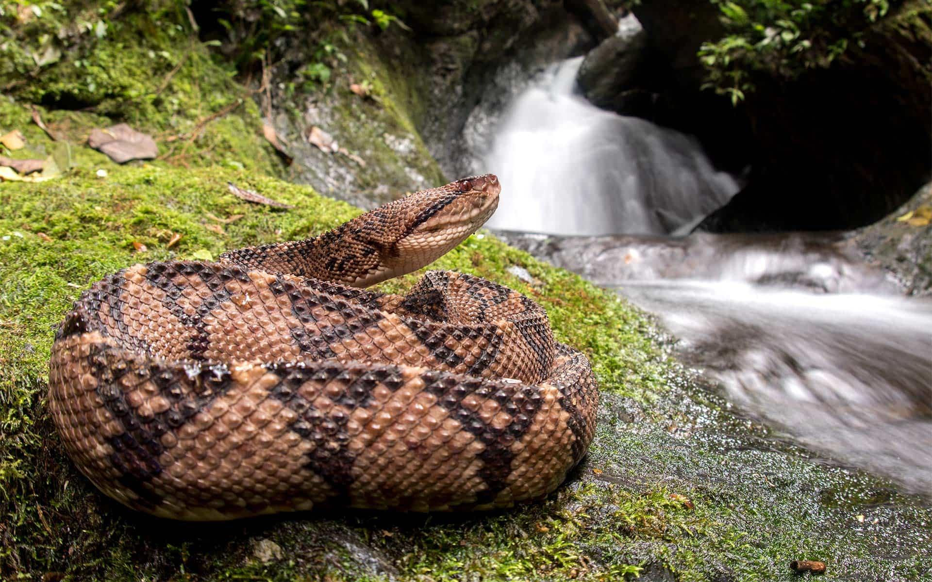 Serpiente en Mashpi Lodge