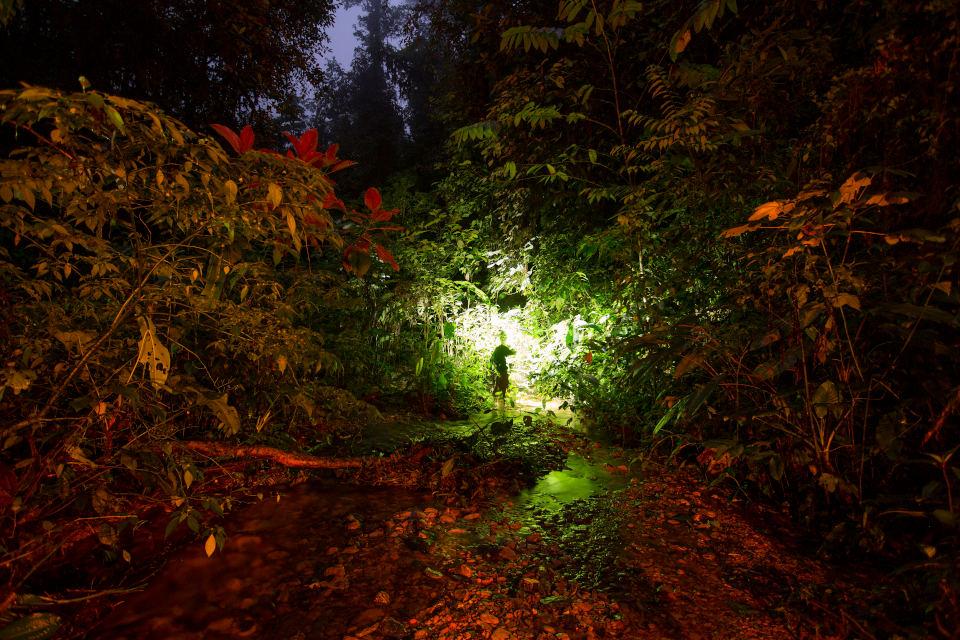 Caminatas nocturnas Mashpi Lodge