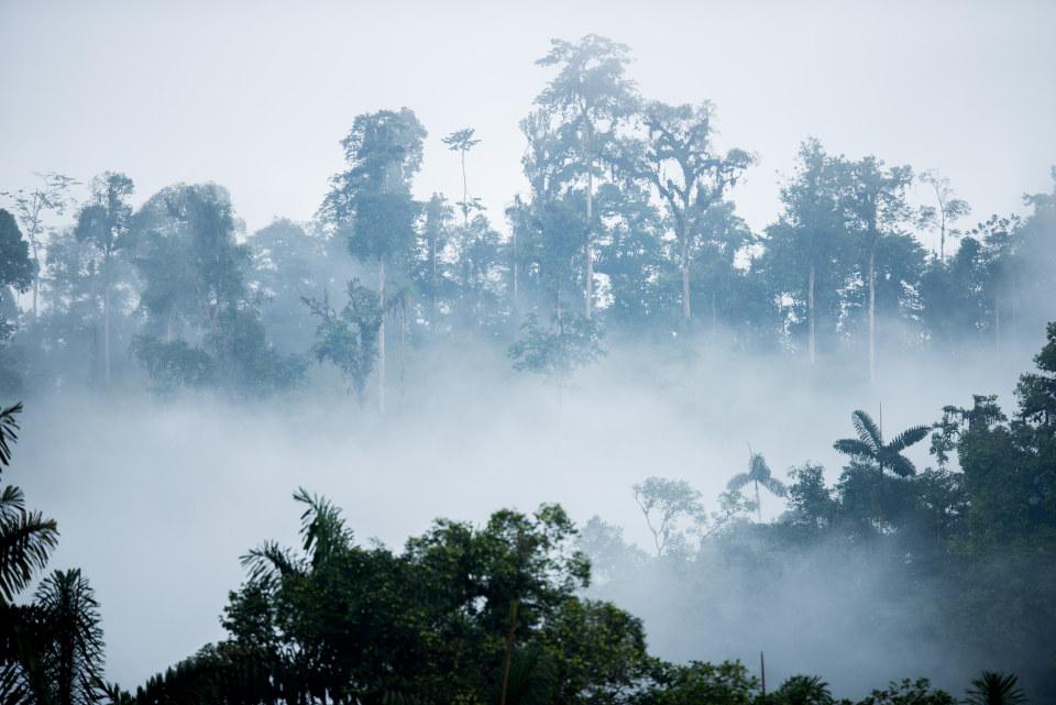 Bosque nublado de la reserva de Mashpi