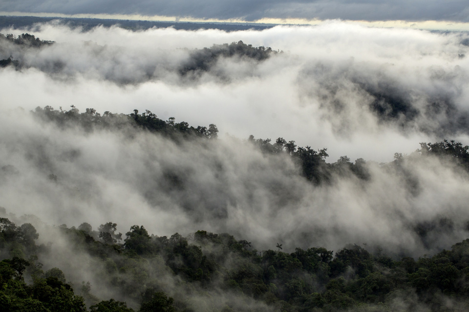 Mashpi Reserve Choco bioregion, view from cloud forest