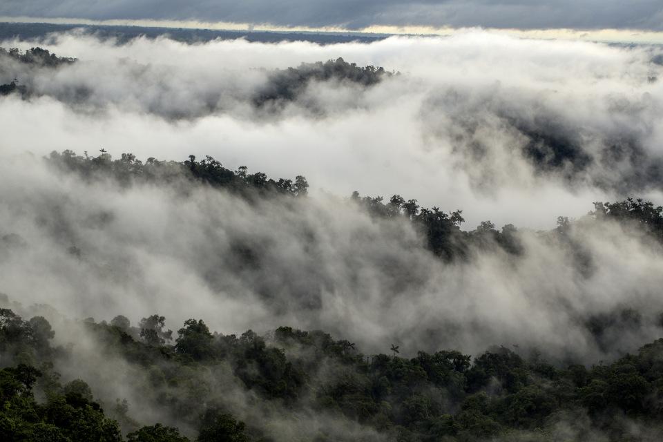 Reserva de Mashpi en la Bioregión del Chocó, vista desde el bosque nublado
