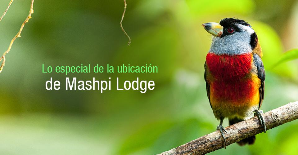 Lo especial de la ubicación de Mashpi Lodge