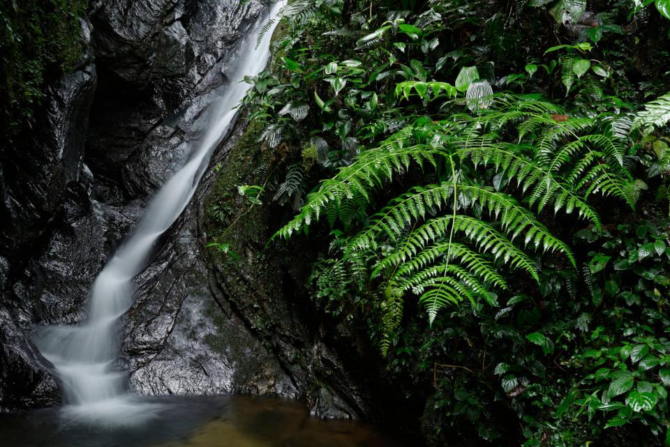 Follaje y cascada en la reserva de Mashpi