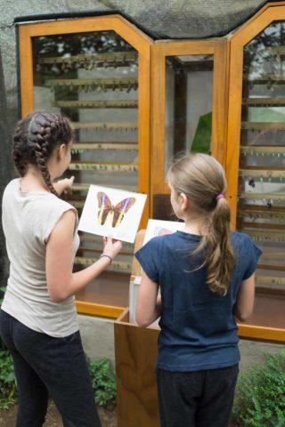 Observation at Mashpi's butterfly center