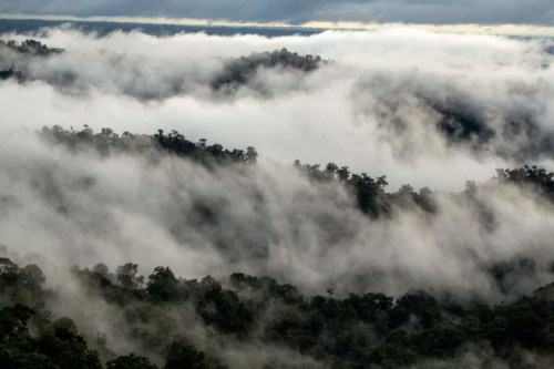 Cloudy view of Mashpi's Forest