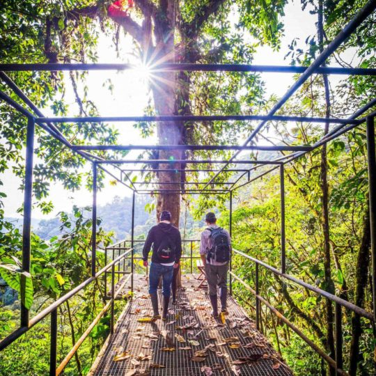 Jungle walkway at Mashpi Lodge