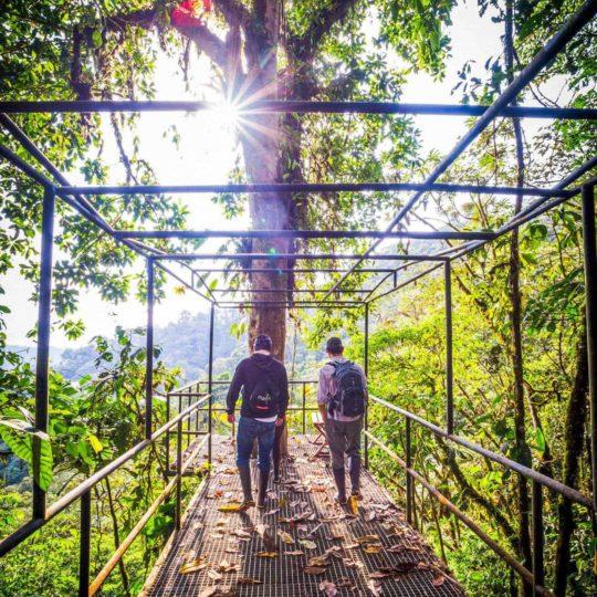 Jungle walkway at Mashpi Lodge