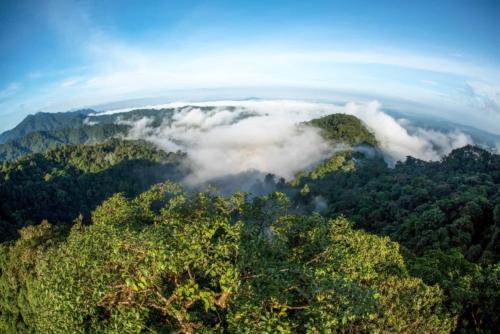 Forest landscape of Mashpi Lodge