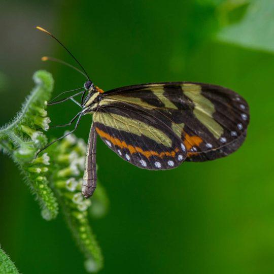 Butterfly at Mashpi