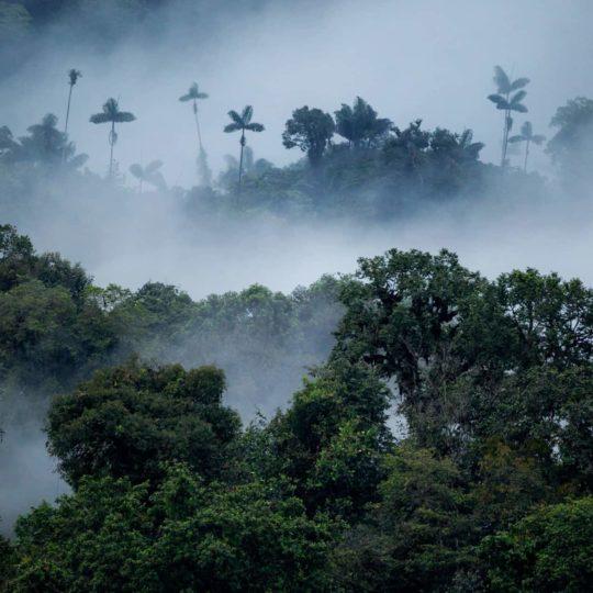 Mashpi forest