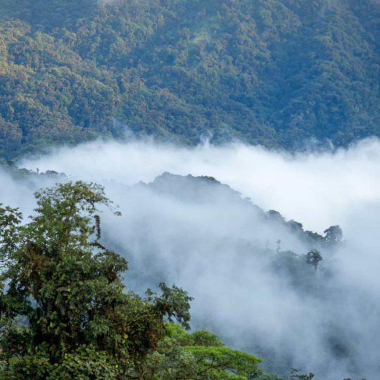 Cloudy view of Mashpi