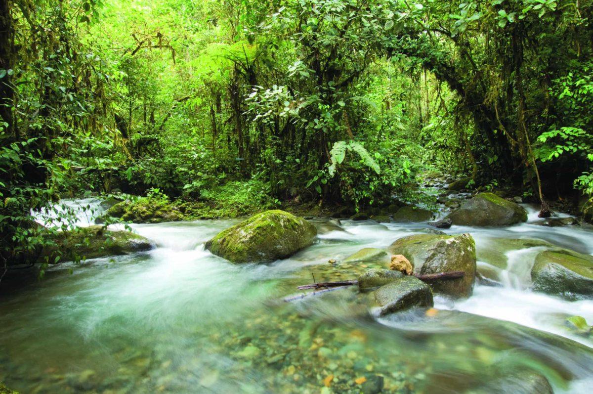 mashpi-lodge-river-1200x797.jpg