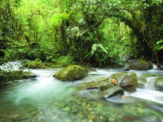What's the difference between the Mashpi Reserve and the Amazon in Ecuador?