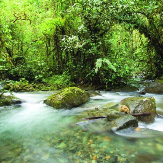 Mashpi Lodge's river