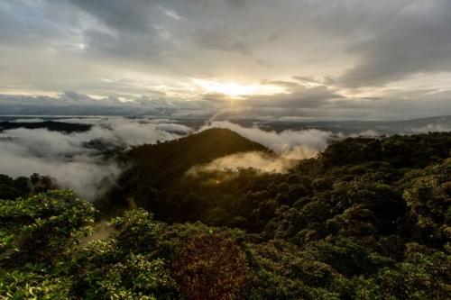 View at sunrise of Mashpi's forest