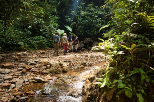 Walk in Mashpi Lodge's trails
