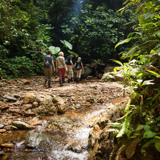 Walk in Mashpi Lodge's trails
