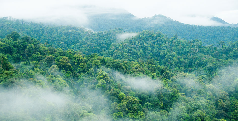 Cloud forest surrounding Mashpi Lodge