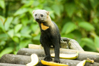 wildlife Mashpi rainforest
